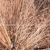 Brown grass pattern.