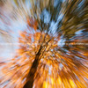 Autumn motion blur