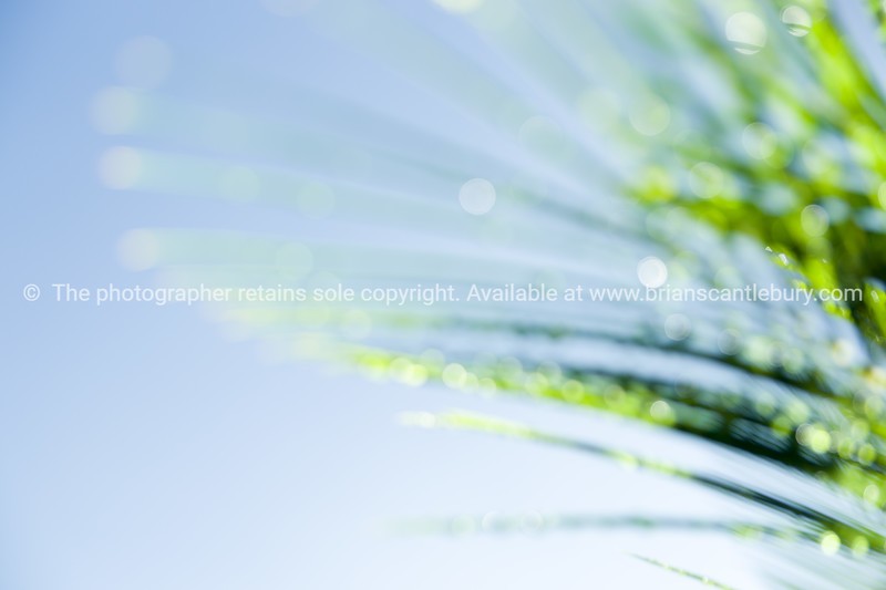 Defocused Cycad frond light catching on dew drops against blue sky.