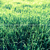 Green grass effect backlit defocused