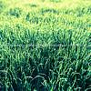 Green grass effect backlit defocused