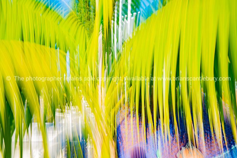 Tropical palm leaf background with blur effect.
