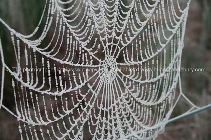 Spider web frost encrusted.