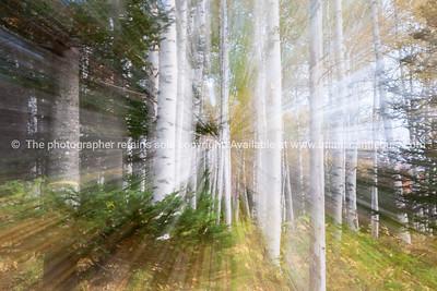 Sunlight streams through New England forest.
