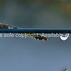 Water drop on fence wire.<br /> Fine art photography, imagine this image on your wall. photo art Great images to enhance a modern decor. Colour tones can be altered to better compliment your colour scheme.  Please just email if you have any specific requirements; brian@brianscantlebury.com