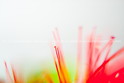 Red flower abstract, isolated on white.