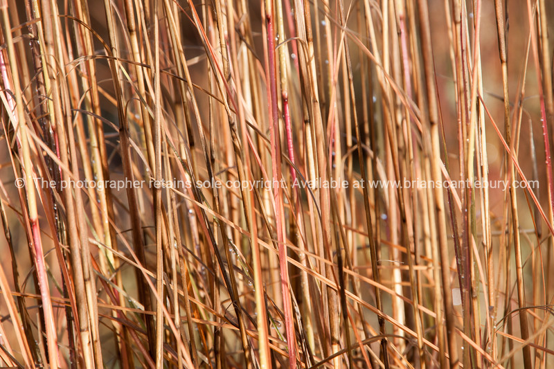 Nature abstract, grass close up.
