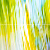 Tropical palm leaf background with blur effect.