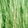 Nature abstract, green grass motion blur.