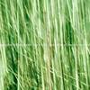 Nature abstract, green grass motion blur.