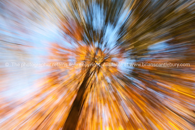 Nature abstract, zoom blur