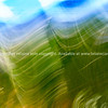 Cycad frond background blur.