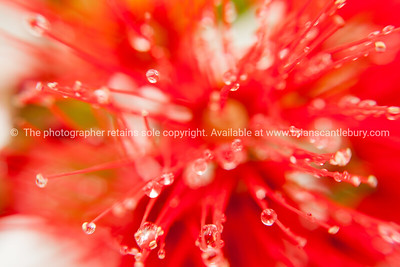 Red flower abstract.