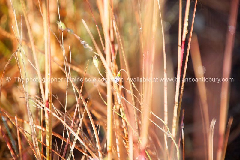 Dry grass with small blue flower.