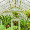 Impression of a Visit to the Conservatory