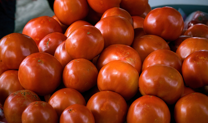 Tomatoes 20090715-_mg_0071-8