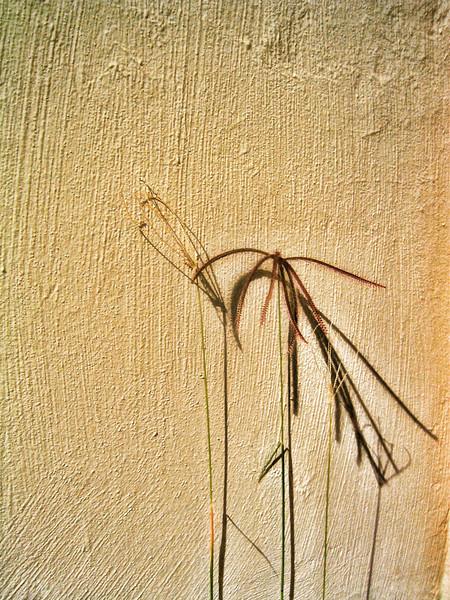 Wall Flower 001