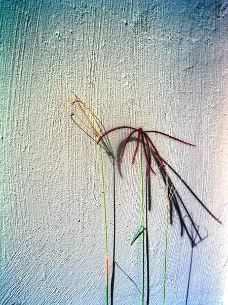 Psych Wall Flower 052