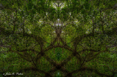 Abstract, mirrored live oak with moss