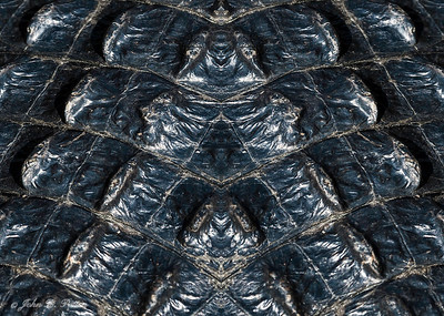Abstract, mirrored alligator hide
