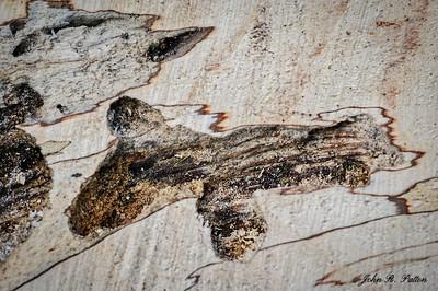 Wood creature