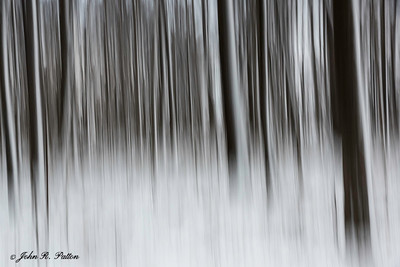 Winter trees abstract.