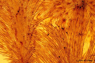 Rust feathers