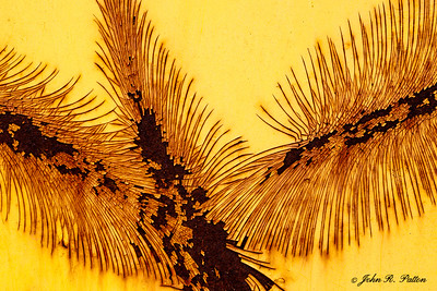 Rust feather