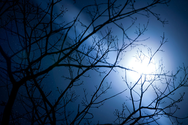 Moon and Tree Branches