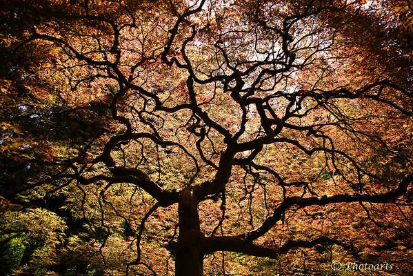 """""""Unity Tree"""""""