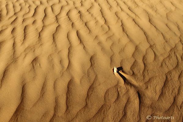 """""""Sea of Sand"""""""
