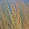 Reeds Abstract, June Lake