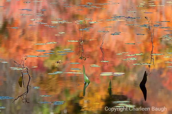 Orange&GreenMG0463VT1092007