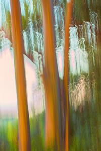 The Rainbow Grove