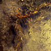Kelp Abstract