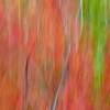 Abstract of maple, birch , oak, aspen and ash tree foliage near Jay Peak in the Green Mountains of northern Vermont