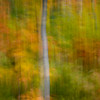 Abstract of autumn leaves near Jay Peak in the Green Mountains of northern Vermont