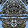 Tree Gods