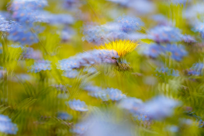 Impressions of Spring - Hidden in the Garden