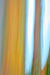Rainbow Trunks