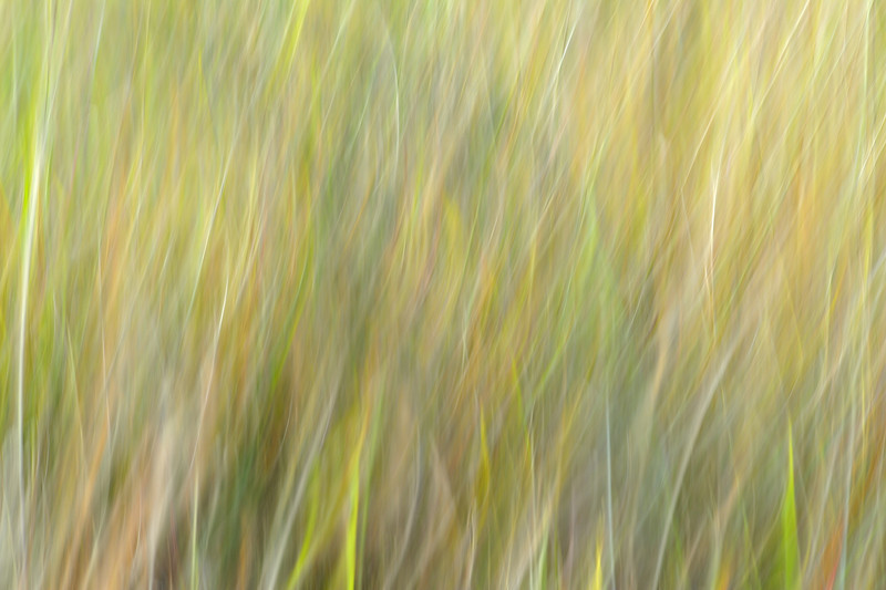 Serengeti Grass Abstract