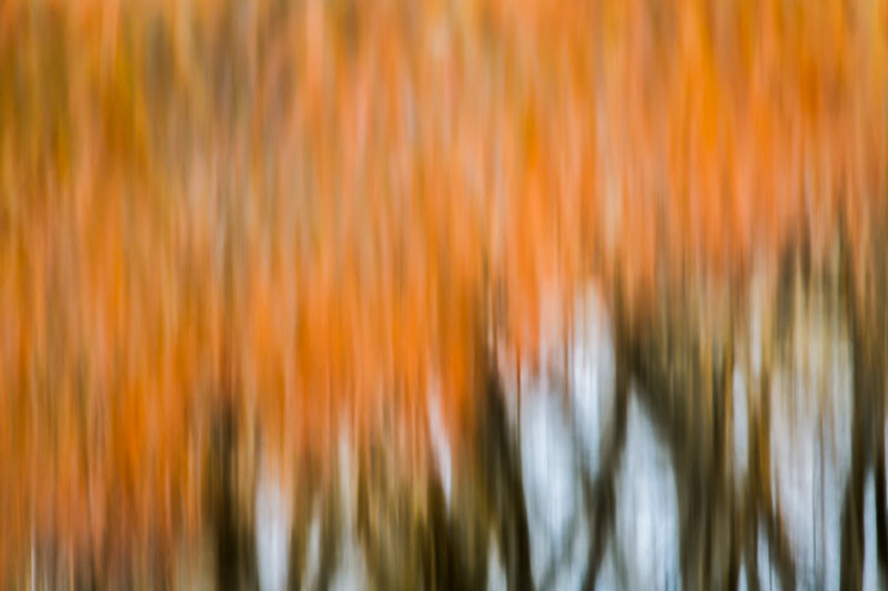 Willows Reflection abstract at Calamus Reservoir near Burwell, Nebraska