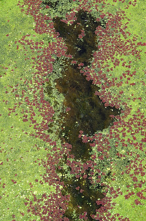 Swampwater at Cypress Creek