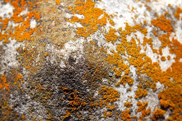 Texture on Rock