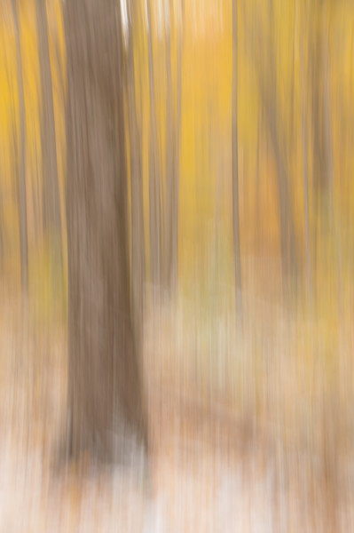 Dance of the Golden Forest