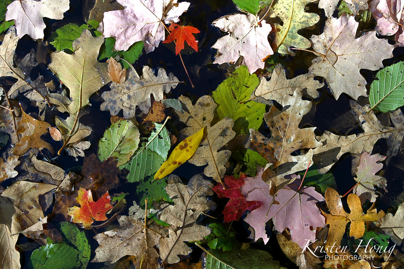 """Kaleidoscope of Color"""