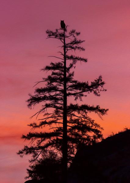 Sunset Sentinel