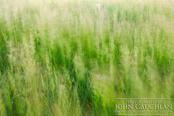 prairiegrass(abstract1a)