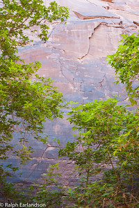 Trees and canyon wall at Devil's Kitchen,  in the Needles section of Canyonlands National Park, Utah.