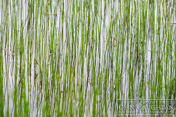 Reeds1a